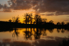 G'Night (A Costigan (off for a while)) Tags: sunset sunlight reflections cartonhouse kildare trees canon eos ireland irish colours