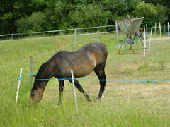 Ponies & Horses (Rory Llowarch) Tags: summer england horses horse english nature sunshine animals grey countryside farm sunny hampshire riding pony fields chestnut ponies equestrian equine englishcountryside stables ponys countrywalks thehighlands hampshireengland hampshirecountryside horsefields farehamhampshire