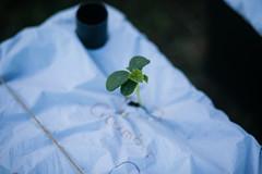 Sarah Dahl (13) (canvasbackmissions) Tags: garden diabetes 2014 ebeye earthbox sarahdahl canvasbackmissions