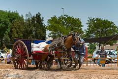 Arrancando tras la parada obligatoria (Ximo_Bueno) Tags: caballos pasvalenci algemes riberaalta tiriarrossegament tiroyarrastre deportespopulares