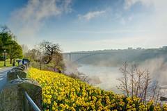 Bridge at Niagara Falls (David Grigo Fotografie) Tags: canada river niagarafalls wasser natur blumen niagara brcke fluss 2014 d600 niagaraflle