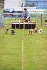 Kent_County_Show_2014_016