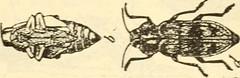 Anglų lietuvių žodynas. Žodis blister blight reiškia lizdinė plokštelė amaras lietuviškai.