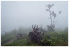 *** (Spartaxus) Tags: trees mountains rain fog analog roots poland silesia beskidy rossman