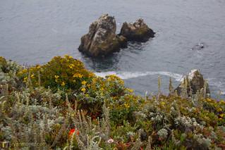 Bodega Bay Wildflowers