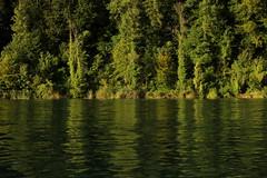 Rhein ( Hochrhein - Fluss - River ) zwischen der T.ssegg und E.gisau im Kanton Zrich in der Schweiz (chrchr_75) Tags: chriguhurnibluemailch christoph hurni schweiz suisse switzerland svizzera suissa swiss kantonzrich chrchr chrchr75 chrigu chriguhurni 1408 august 2014 hurni140808 august2014 rhein rhin reno rijn rhenus rhine rin strom europa albumrhein fluss river joki rivire fiume  rivier rzeka rio flod ro