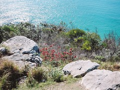 Beautiful colours of the coast (Imaken Images) Tags: flowers blue sea mamiya film water mediumformat coast kodak australia oldschool portra