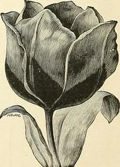 Anglų lietuvių žodynas. Žodis late-flowering reiškia pabaigoje-žydėjimo lietuviškai.