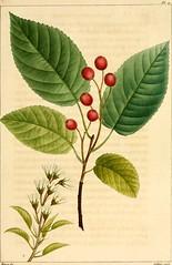 Anglų lietuvių žodynas. Žodis arborescent plant reiškia arborescent augalų lietuviškai.