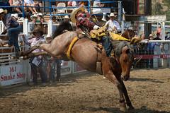 Bronco Rider, Omak Stampede (AdamCohn) Tags: adam rodeo complex wildfires omakstampede adamcohn wwwadamcohncom cohnwwwadamcohncomomakwaomak stampedesuicide racecarlton