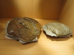 IMG_1730 (fotosmak) Tags: mar guipzcoa acantilados zumaya flysch geologa rasamareal centrodeinterpretacindelanaturalezaalgorri