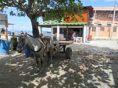 Het vervoermiddel in Capurgana