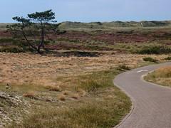 20140830 019 (Walter_71) Tags: nature dune heath noordhollands duinreservaat