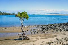 Beach Life (g0rsty) Tags: sea sky beach water weather rocks beautifulearth