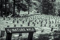 Cemetery- Antagonism (M$ingh.) Tags: trees signs cemetery graveyard dead nikon afternoon monotone silence spiritual naturewalk athensohio lunaticasylum theridges d7100 gravestoones nikond7100
