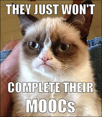 Grumpy MOOC cat by ryan2point0, on Flickr