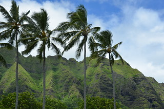 Oahu Tourist