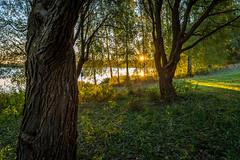 Iisalmi (Tuomo Lindfors) Tags: autumn sun sunrise suomi finland syksy aurinko iisalmi auringonnousu theacademytreealley paloisvirta
