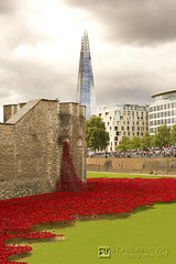 Blood Swept Lands and Seas of Red (StabbaWin) Tags: tower ceramic poppy poppies ww1 remembrance shard firstworldwar toweroflondon tompiper paulcummins bloodsweptlandsandseasofred ceramicpoppies