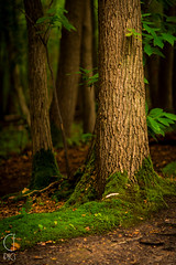 (CFpic) Tags: france tree forest arbre fort