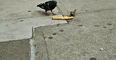 Crust of the Problem (Robert S. Photography) Tags: street nyc colour bird brooklyn canon crust pigeon powershot pizza sparrow 2014 a3400