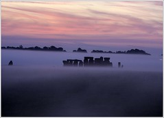 stonehenge - autumn equinox (eyeontheworld2008) Tags: uk autumn mist english heritage monument misty rural sunrise landscape ancient 500v20f outdoor scenic stonehenge wiltshire prehistoric equinox stonecircle