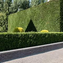 Geometry (wim.schaut) Tags: belgië lokeren oostvlaanderen vlaanderen tuin voortuin zon zonnig