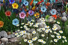 glass (greenelent) Tags: flowers art glass mi garden michigan photoaday daisy 365 suttonsbay puremichigan
