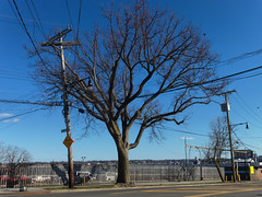 City Island, The Bronx (cisc1970) Tags: cityisland cityislandthebronx thebronx nyc canon canonpowershots100 s100 powershots100