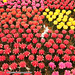 Beautiful Cameron Highlands - cactus, tea and flower capital of Malaysia
