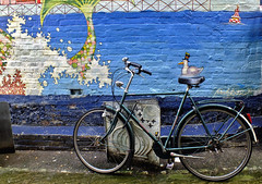 You look so pretty, as you were riding along                Explored June 24th 2014 (Vide Cor Meum Images) Tags: street art bike sussex seaside mural comedy brighton fuji seagull transport streetphotography humour east explore finepix push fujifilm cor vide laines hs20 meum markcoleman explored hs20exr mac010665yahoocouk videcormeumimages ilobsterit markandrewcoleman