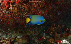 July 7, 2014 10:16 AM (Ocean Explorers St. Maarten) Tags: borderfx