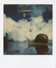 (lb.polaroids) Tags: sky 1212 snail escheresque 1212men