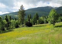 sznpomps volt a tj / colorful landscape (debreczeniemoke) Tags: summer mountains forest landscape colorful path meadow hike trail hegy tjkp nyr erd tra svny radnaihavasok maramure mramaros kaszl canonpowershotsx20is sznpomps tothepietrosulrodneipeak muniirodnei anagypietroszcscsfel