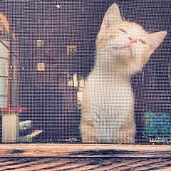 Summer Sniffs.      #adoptable (kisluvkis) Tags: square bestof nashville squareformat iphoneography instagramapp uploaded:by=instagram bestof2014