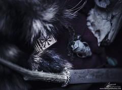 Natura Morta. (Separate Sky) Tags: stilllife skull tail goat deer mink bracelet copper ritual fade blade raccoon viking ethnic pagan malachite