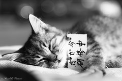 Good night, sleep tight :)) (Masahiko Futami) Tags: blackandwhite bw cute monochrome animal japan cat canon photographer sleep kitty kawaii 日本 猫 動物 白黒 可愛い モノクローム eos5dmarkiii