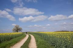Chemin faisant (J-Dell) Tags: c n traverse p nuage paysage sentier chemin champ ligne piste allee barbel personnage laie layon a arbreenfleur tortille