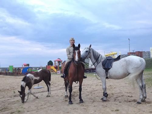 Konie z zagrody w Uniejowie