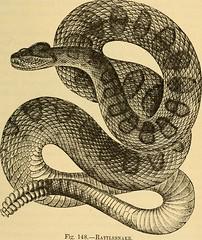 Anglų lietuvių žodynas. Žodis snake skin reiškia gyvatės odos lietuviškai.