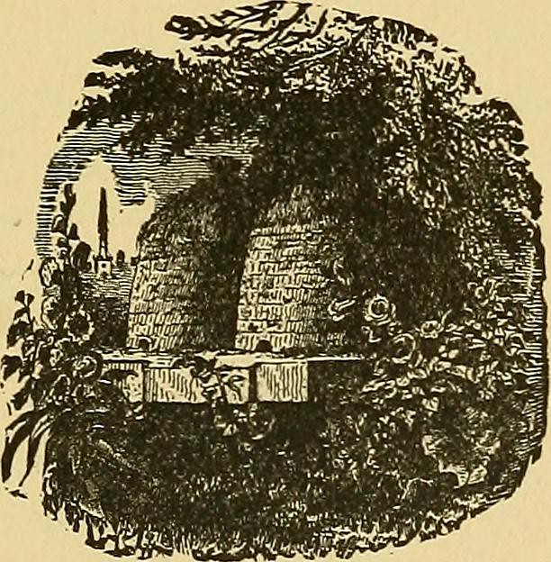 "Image from page 468 of ""Green fields and whispering woods; or, The recreations of an American ""country gentleman""; embracing journeys over his farm and excursions into his library"" (1886)"
