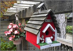 Theme 24  - Birdhouse (supe2009) Tags: pink flowers trees red summer canada cute nature leaves stairs fence fun wooden backyard colorful bc bell branches birdhouse courtyard belltower burnaby summertime westcoast begonias redandwhite homeforbirds photobysue woodenbirdhouse cascadevillage paintedbirdhouse churchbirdhouse hangingbirdhouse themebysue neighboursbirdhouse
