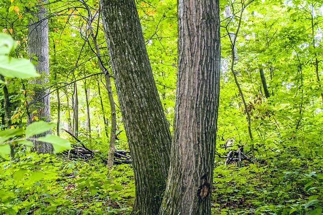 John Sunman's Woods - August 16, 2014