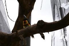 Exotico (Jos Ramn de Lothlrien) Tags: horse birds animal animals fauna mexico lago caballo zoo teotihuacan flamingo lion aves jr bull paseo leon iguana pato nubes zebra animales bufalo snakes cabra tigre toro cisne iguanas reptiles vaca chiva guacamaya tigres buey ciervo tucan leones aguila ninfa faisan serpiente cebra garza venado jirafa dromedario zoologico semental cotorros tucanes producciones caribu agaporni gallinita reinoanimal cotorritos