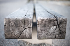 Wooden age (Storkholm Photography) Tags: park wood tree bench 50mm nikon sweden stockholm bokeh seat beam age 50mmf14 d610 agerings
