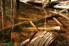 (33 Photography) Tags: wood light shadow lake forest dead surface  lightandshadow tadpole nantou          lakesurface nantouhsien