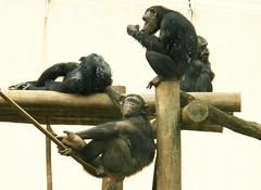 Image7 (Daniel.N.Jr) Tags: animal selvagem zoologico kodakz990