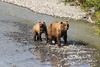 Grizzly bear mom and her cub (cazfoto) Tags: bear alaska wildlife grizzly abercrombie valdez brownbear grizzlies osos