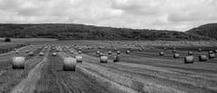 Bales of Straw (easy X) Tags: landscape straw farmland fields