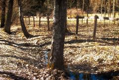 Rural (Xerethra) Tags: nature 35mm landscape geotagged spring nikon europa europe sweden natur skandinavien may sverige scandinavia maj vår landskap kallhäll 2013 stockholmslän nikond80 dikartorp kallhällstockholmslänsverige järfällla